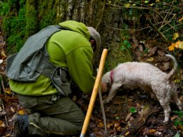 Truffle hunting with a lagotto dog in the Pisan hills
