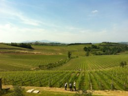 Guided tours to wineries with sampling of wines