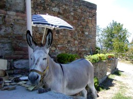 Orazio the donkey