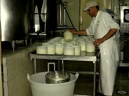 Making the cheese