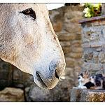 Orazio the Donkey