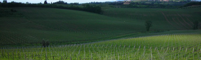Vineyards in March