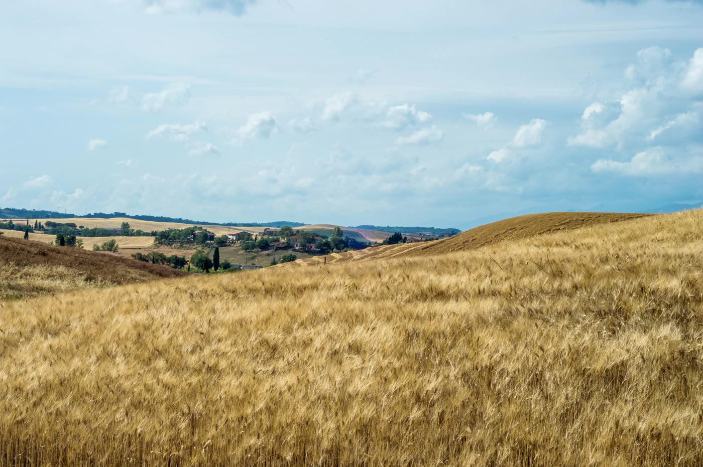 Wheat fields in Tuscany