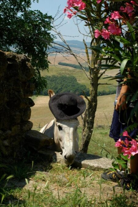Donkey wearing hat