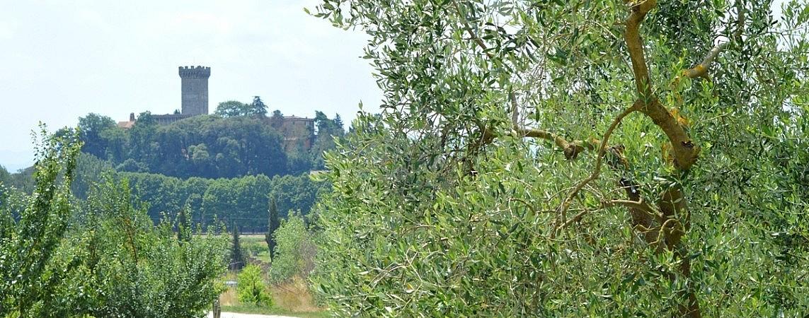 Olive grove and Vicopisano