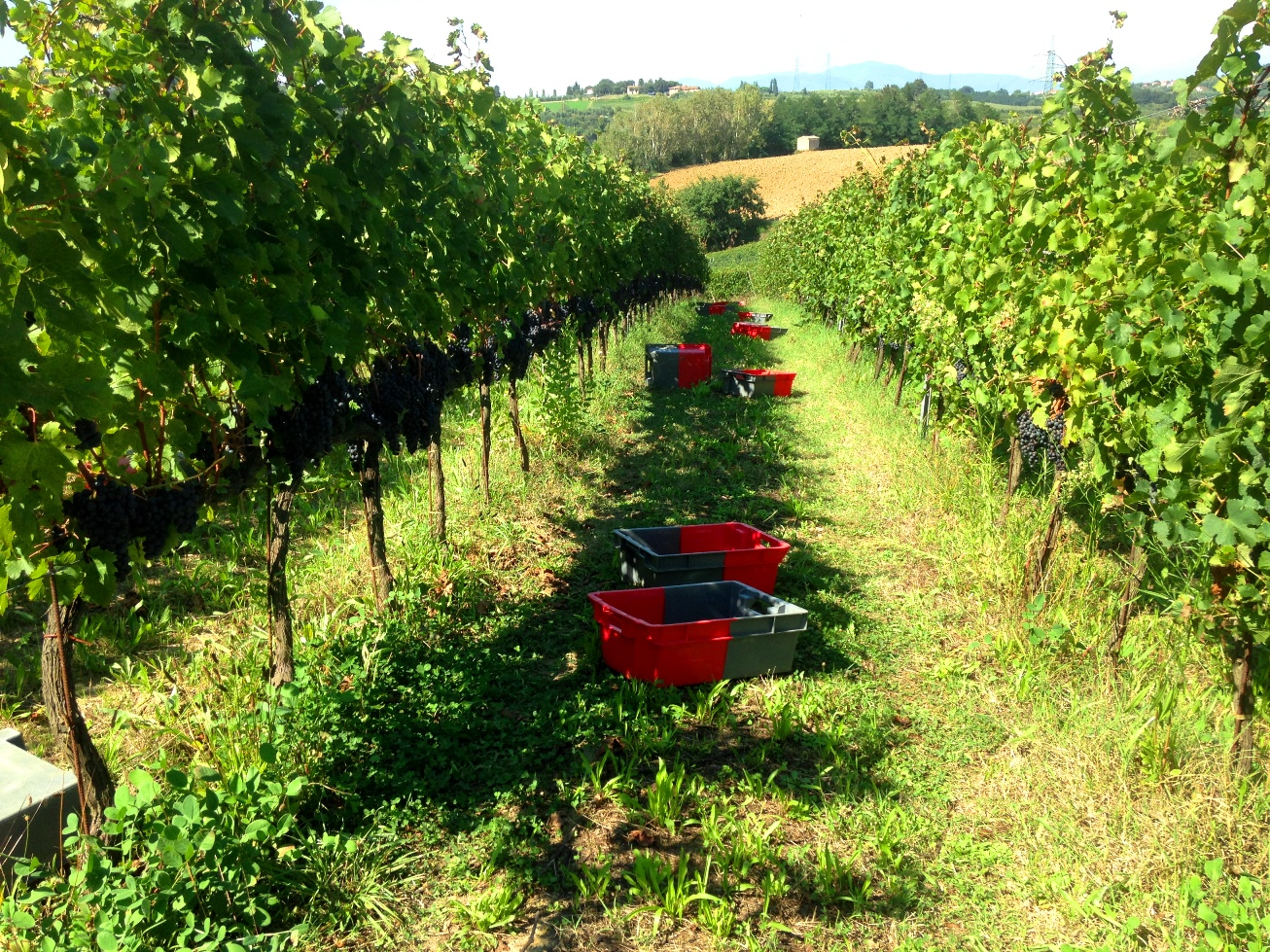 Crates in the vineyard
