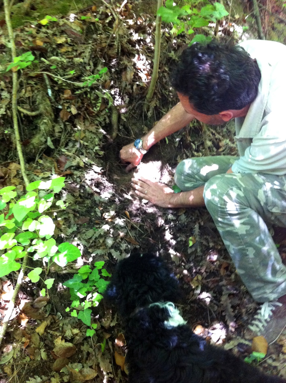 Extracting the truffle