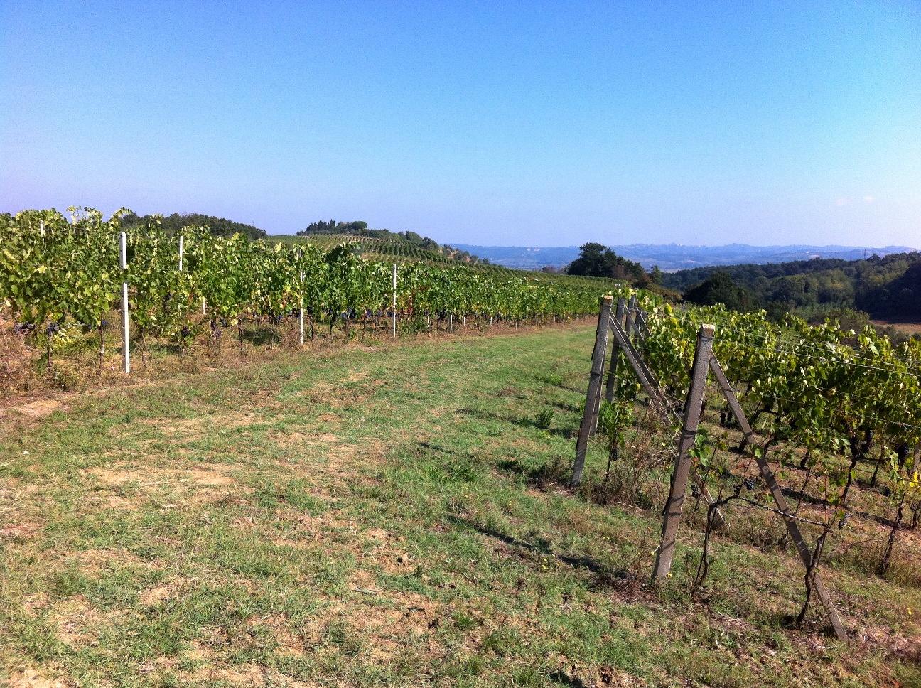 Vineyards after the harvest