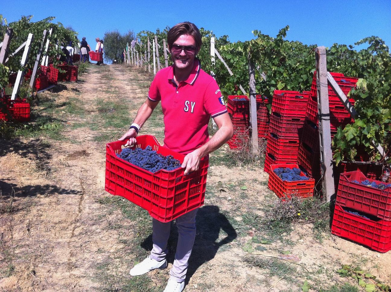 Grape harvest satisfaction