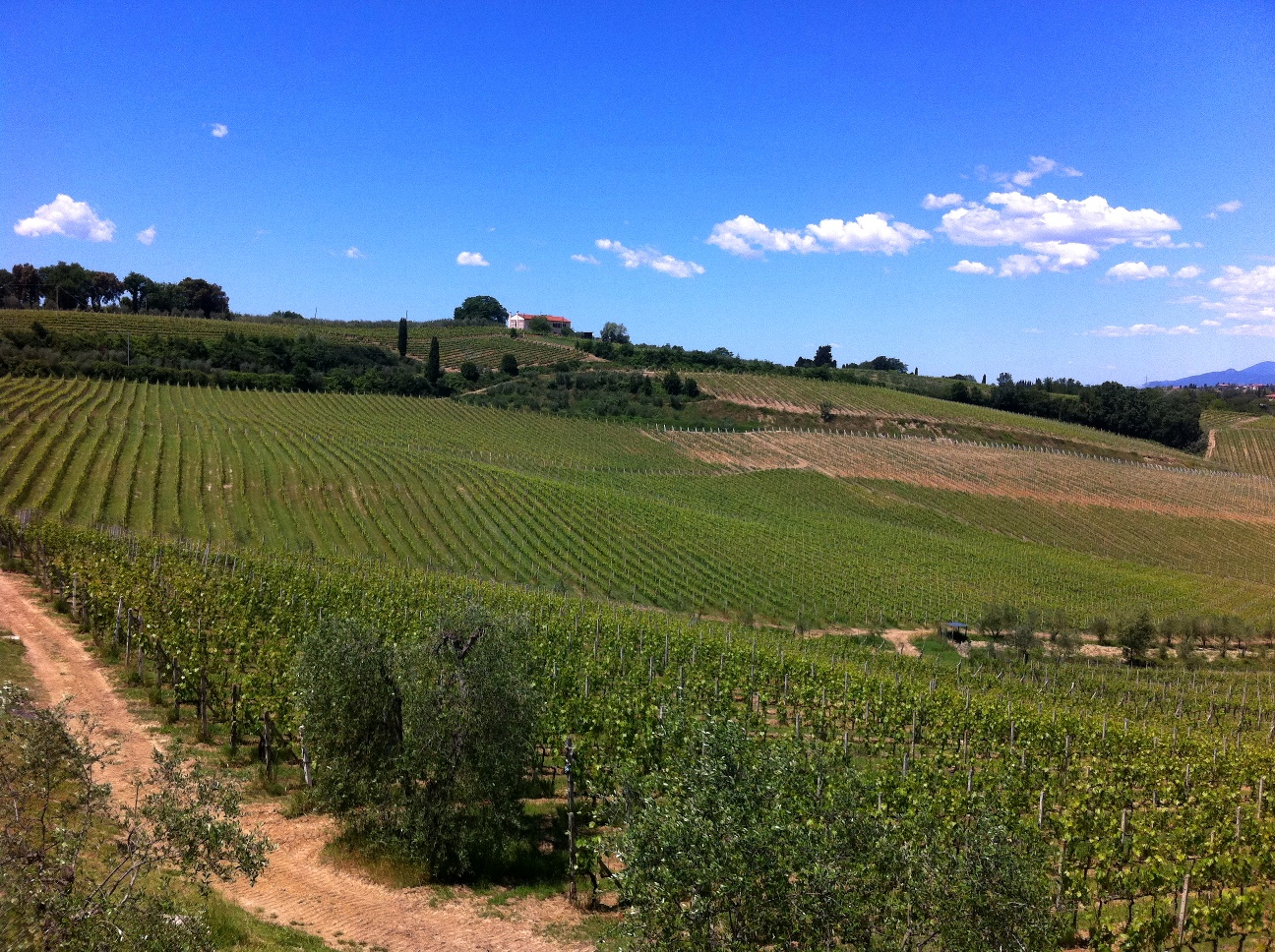 Vineyards and blue sky