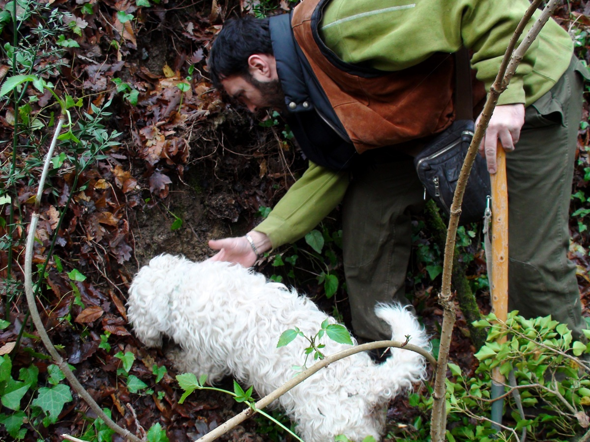 Truffle hunter and dog