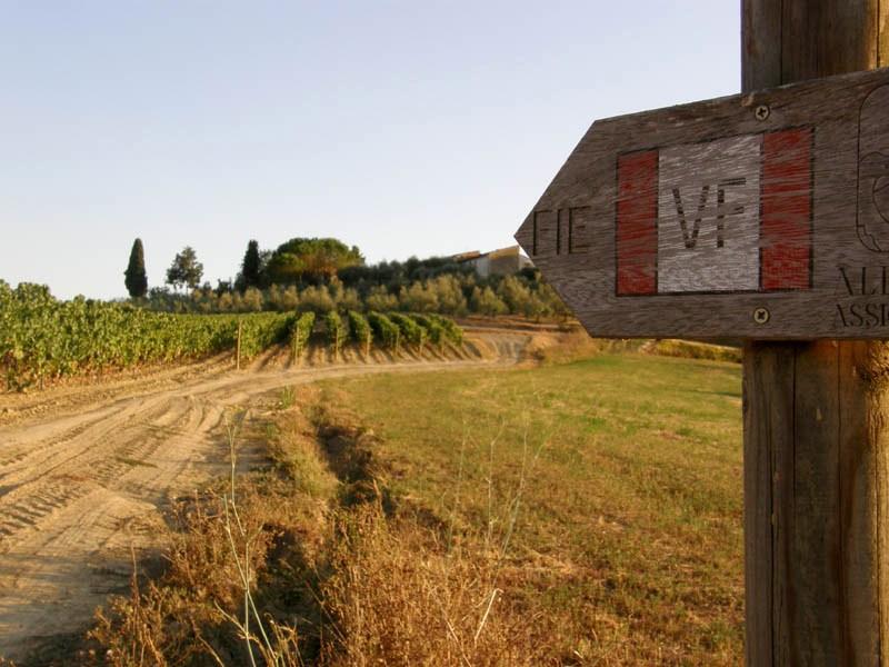 Vineyards along via Francigena