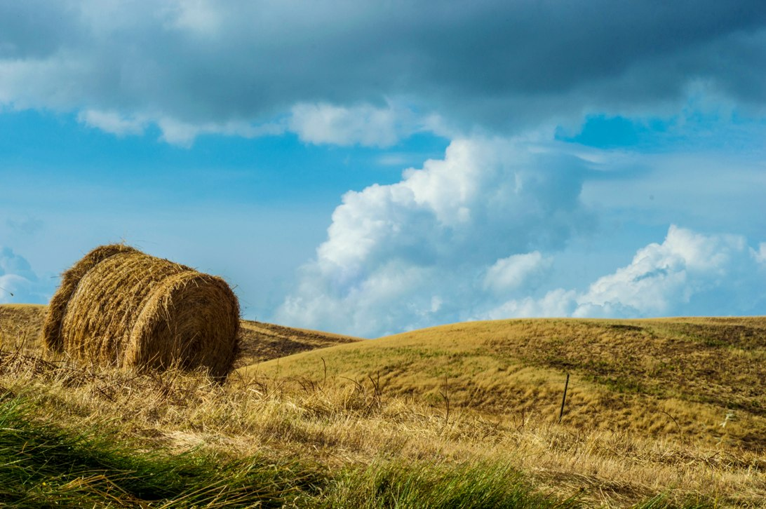 Wheat fields and clouds