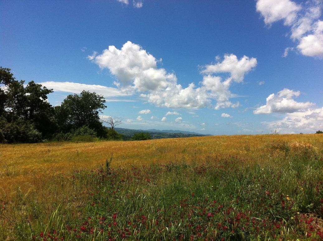 Tuscan wheat fields
