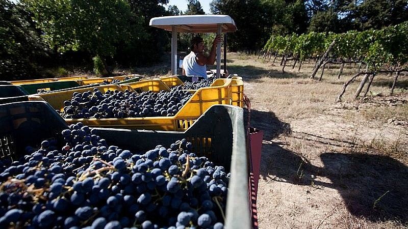 Agriturismo for grape harvest experiences in Tuscany