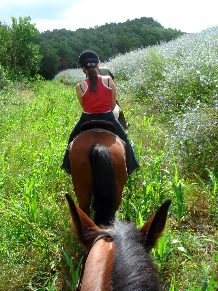 Horse riding excursion in Tuscan meadow