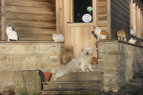 Pet-friendly agriturismo in Central Tuscany