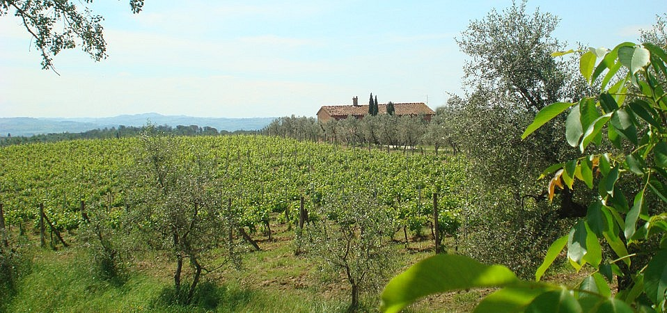 Farmstay and winery near Montelupo, by Florence