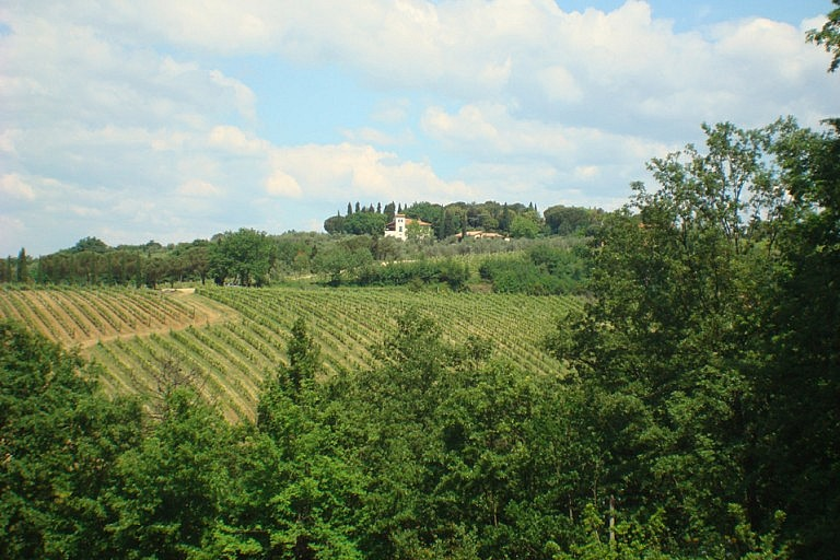 Wine estate near Florence