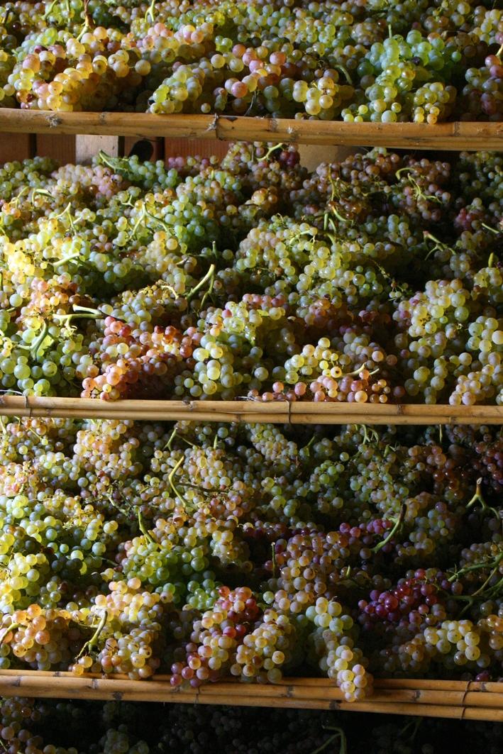 White grapes ageing to make vinsanto