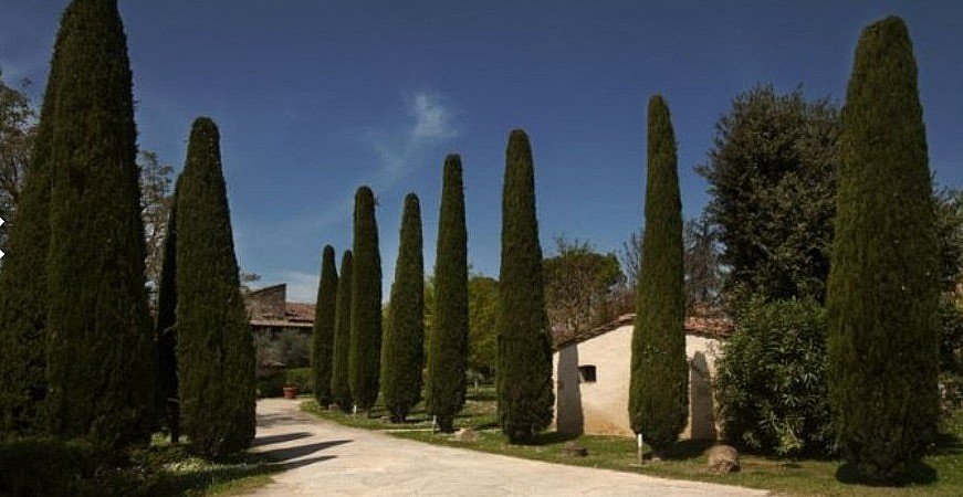 Cypress alley accessing a Tuscan resort