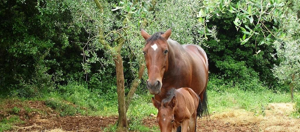 Horses at the organic farm