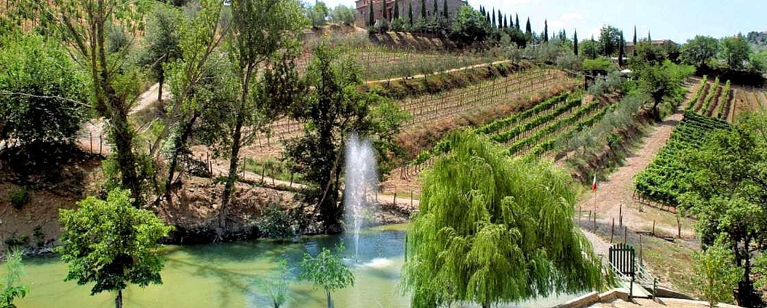 Park of olive trees and vineyards surrounding agriturismo