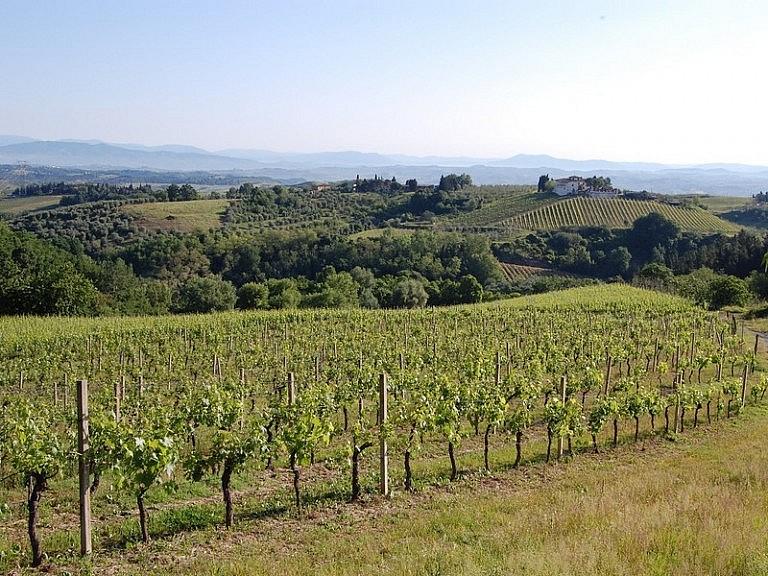 Vineyards in the chianti fiorentino