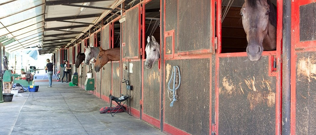 Horse stables at riding ground in agriturismo near Florence