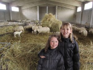 Two little girls and the sheep