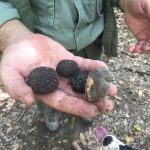 The crop of a truffle hunting session