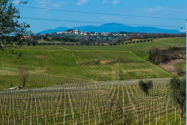 Biking routes in Tuscan vineyards