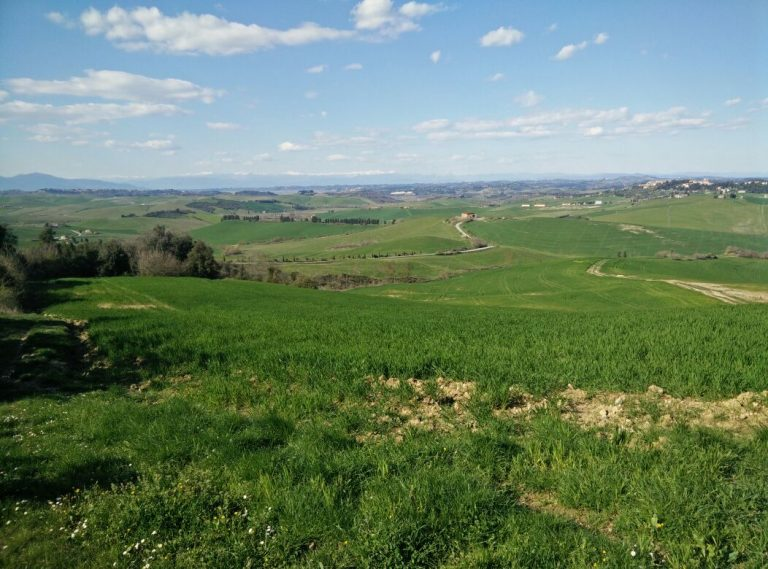 Tuscan fields and Lajatico