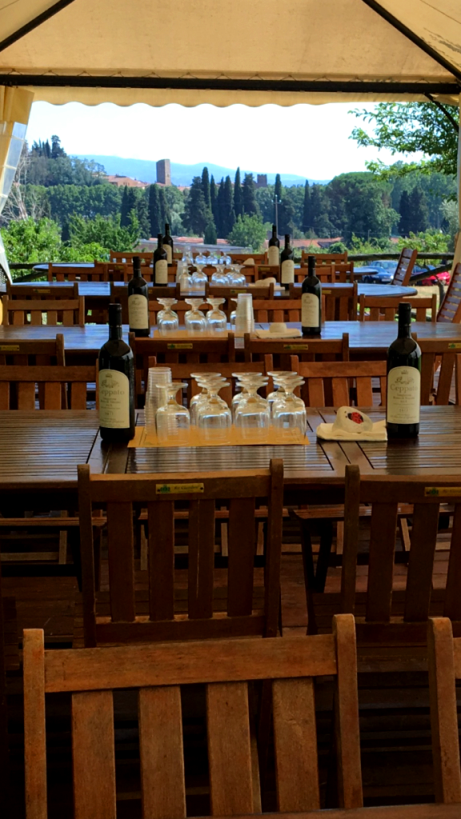 Monte Pisano DOC olive oil