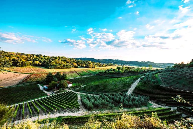 Cooking & wine tasting in San Miniato