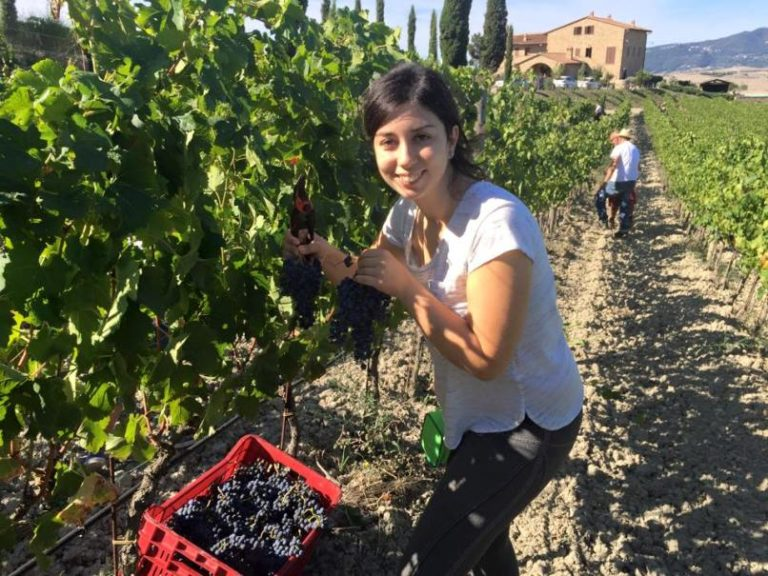 Claudia harvesting her grapes