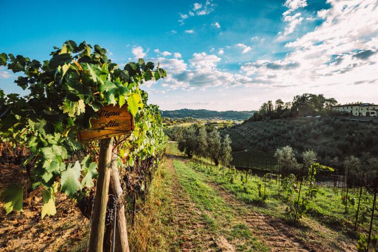 Winery in San Miniato
