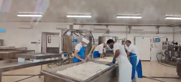 Fresh ricotta making