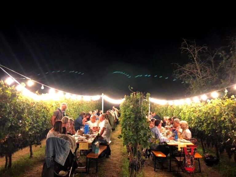 Tables arranged in the vine rows