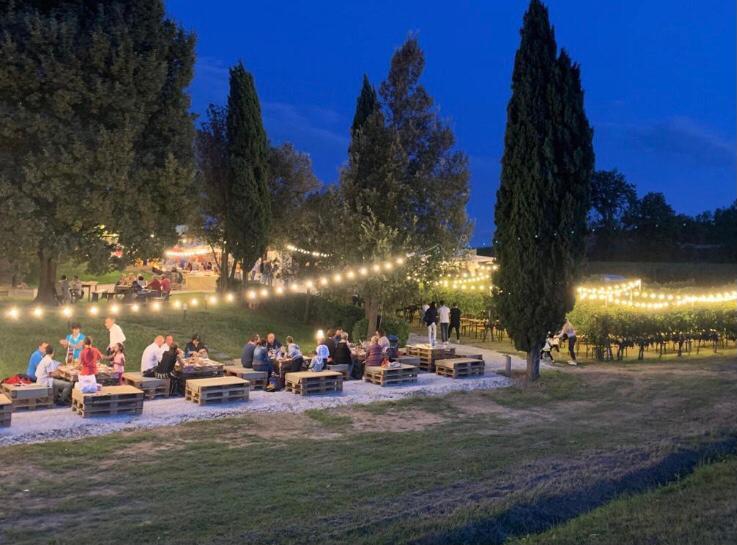 Beautiful vineyards lit at night