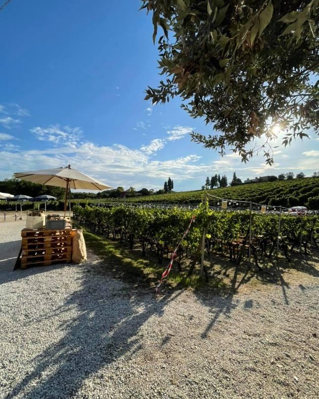 Dining al fresco in the vineyards