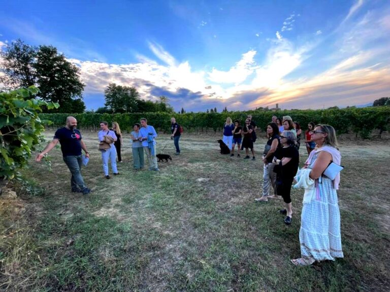 Guided visit to tempranillo vineyards before the festival