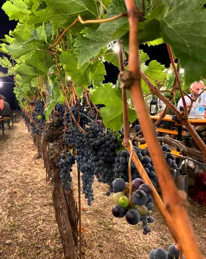 Dining among bunches of grapes